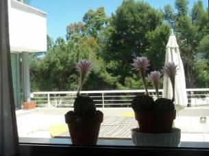 Ventana_cocina_Flor_cactus
